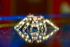 Free Reflections Of A Tarantula Spi Stock Photography - 5058122