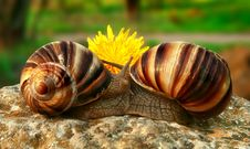 Free Two Grape Snails Royalty Free Stock Photo - 5058335