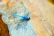 Free Blue Dragon Fly On Rock Royalty Free Stock Photo - 5058355
