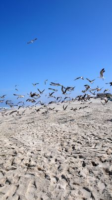 Free Seagulls Stock Photos - 5058403