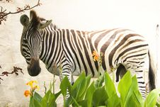 Free Zebra & Flowers Stock Images - 5058414