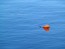 Free Autumn Leaf Stock Photography - 5058592