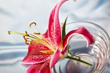 Free Lily, Romantic Mood Stock Image - 5059031
