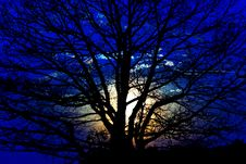Free Silhouette Of A Tree Royalty Free Stock Photography - 5059187