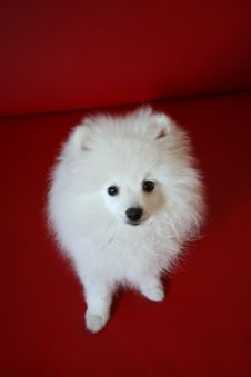 Free Dog Royalty Free Stock Photos - 5059248