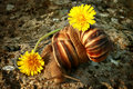 Free Two Grape Snails Royalty Free Stock Photo - 5061205