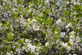 Free White Flowers Royalty Free Stock Photo - 5063515