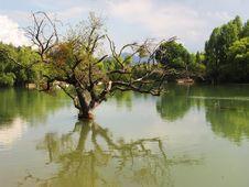Free Tree In Lake Royalty Free Stock Photos - 5060298