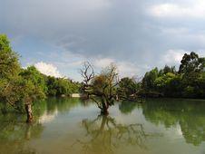 Free Tree In Lake Stock Photos - 5060323
