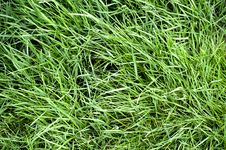 Free Lush Green Lawn Royalty Free Stock Photos - 5061128