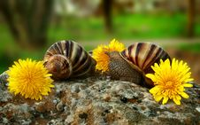 Free Two Grape Snails Stock Photos - 5061203