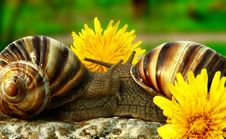 Free Two Grape Snails Royalty Free Stock Photo - 5061225