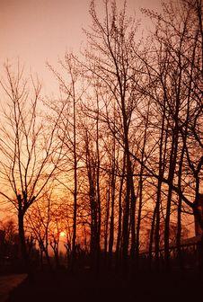 Free Sunset Royalty Free Stock Image - 5061296