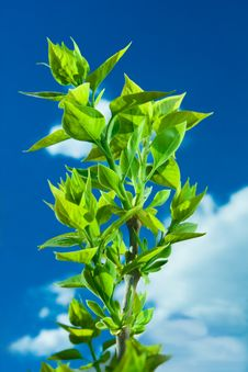 Free Leaf Of The Sky Royalty Free Stock Image - 5061346