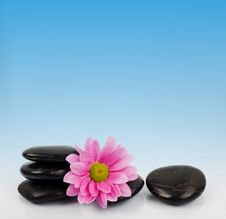 Free Stones And Flower For SPA Stock Photos - 5062083