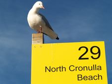 Free Seagull Royalty Free Stock Photo - 5063635