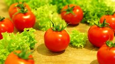 Free Fresh Salad With Tomatoes Royalty Free Stock Images - 5063679