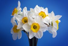 Free Narcissus. Stock Image - 5064421