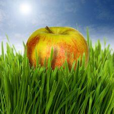 Free Apple Royalty Free Stock Photo - 5066935