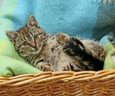 Free Cat In Basket Stock Image - 5067021