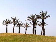 Free Palm Trees Stock Image - 5067321