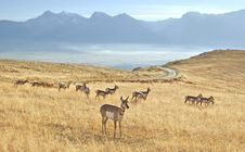 Free Herd Of Antelope Royalty Free Stock Photos - 5068008
