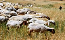 Free Shepherd And Flock Stock Photos - 5068403