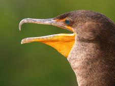 Free Bird Royalty Free Stock Photography - 5068457