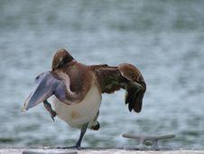 Free Bird Stock Photos - 5068493