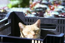 Free Cat In A Crate Stock Photo - 5068650