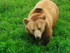 Free Bear In Bushes Stock Photography - 5069712