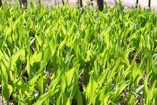 Free Young Green Spring Grass Stock Photos - 5069763