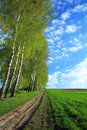 Free Lane In A Field Royalty Free Stock Photography - 5070497