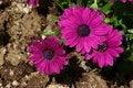 Free Flowers Stock Image - 5073121
