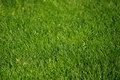 Free Spring Grass With Dew 1 Royalty Free Stock Images - 5077489