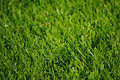 Free Spring Grass With Dew 2 Royalty Free Stock Photo - 5077505
