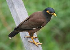 Free Bird Perched On Wooden Rail Stock Photos - 5070473