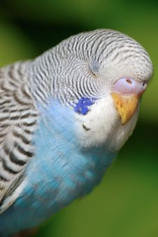 Free Parrot Stock Photo - 5070610