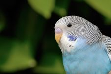 Free Parrot Royalty Free Stock Photography - 5070757