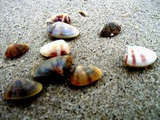 Free Cockle Shells On The Beach Royalty Free Stock Photos - 5070968