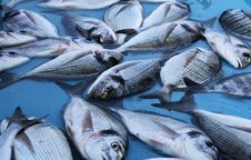 Free Fresh Fish At The Market Stock Images - 5071994