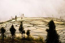 Free Yuanyang Ladder Field Stock Photos - 5072083
