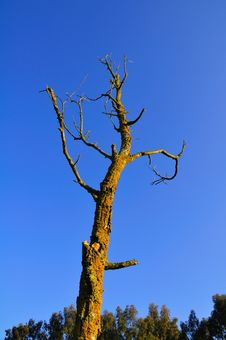 Free Dead Little Tree Stock Photography - 5072682