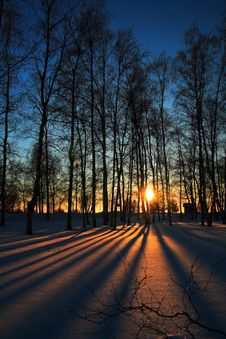 Free Sunset Through Leafless Trees In Winter Royalty Free Stock Photos - 5072828