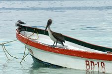 Free Pelican Royalty Free Stock Photography - 5073837