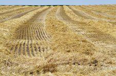 Free Harvested Wheatfield I Royalty Free Stock Photos - 5074068