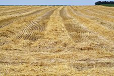 Free Harvested Wheatfield II Royalty Free Stock Photos - 5074078