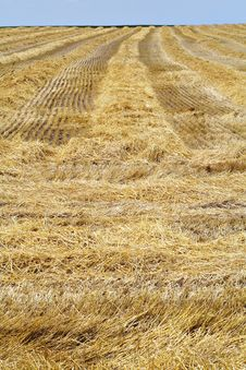 Free Harvested Wheatfield III Royalty Free Stock Photography - 5074147