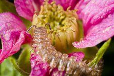Free Centipede On Flower Stock Image - 5074531