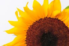 Free SunFlower Studio Series 24 Stock Image - 5076621